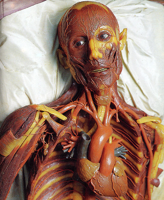 """Despellejado"", modelo anatómico masculino en cera (detalle). Museo di Storia Naturale ""La Specola"", Florencia."